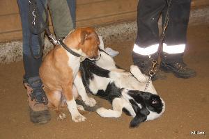 hunde_trning_2010-2011_4.jpg